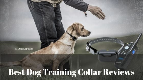 Best Dog Training Collar Reviews 2020 – Buyer's Guide