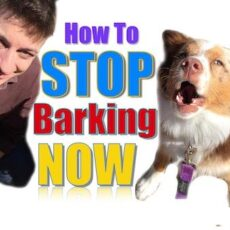 How to Stop my Dogs from Barking: [Detailed Guide]