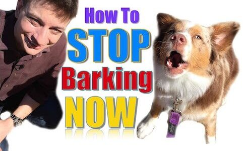How-to-Stop-Dogs-from-Barking